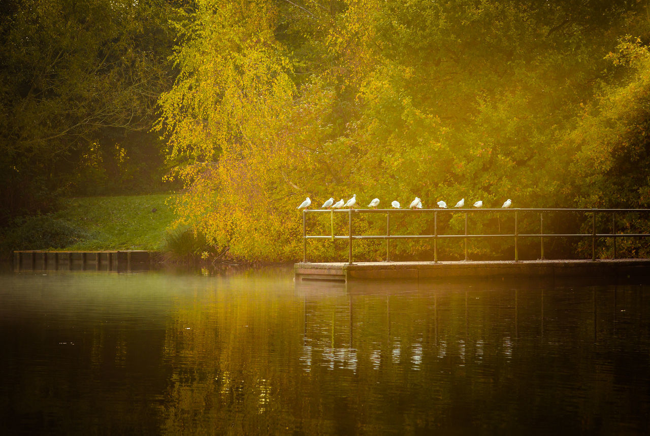 tree, nature, reflection, animal themes, autumn, outdoors, beauty in nature, no people, lake, forest, scenics, tranquility, day, animals in the wild, water, bird, mammal