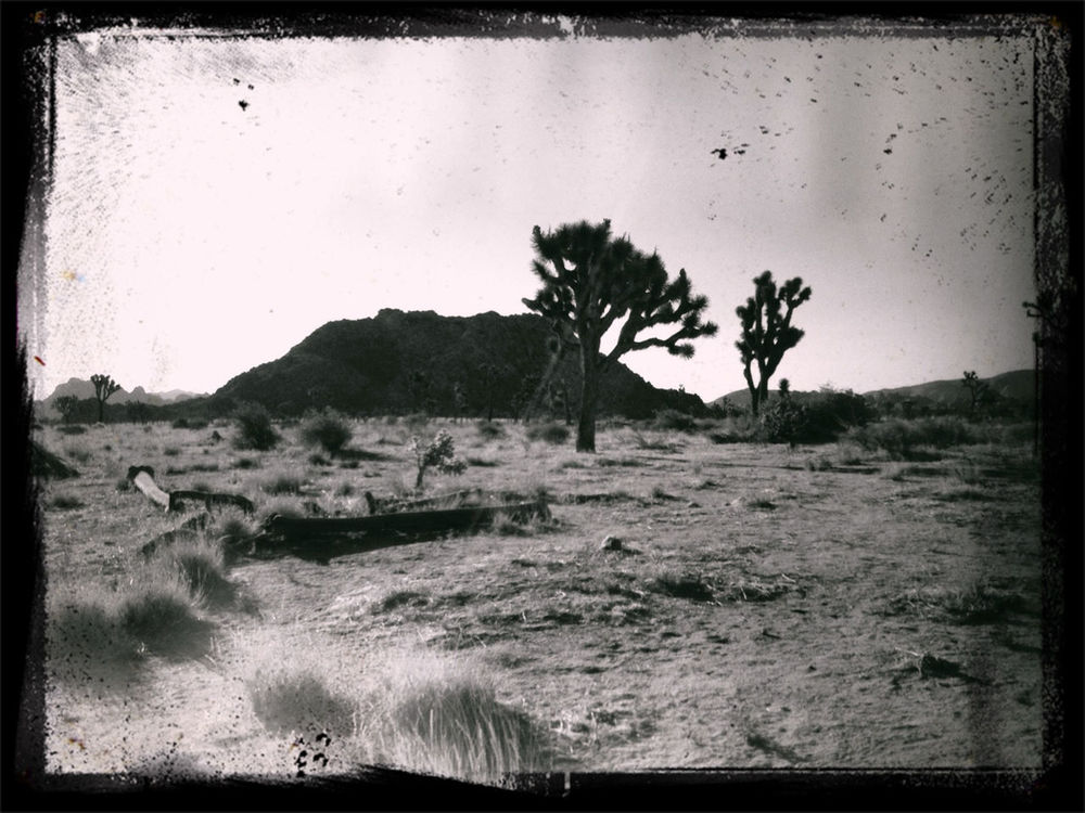 blackandwhite in Joshua Tree by Jen Pollack Bianco