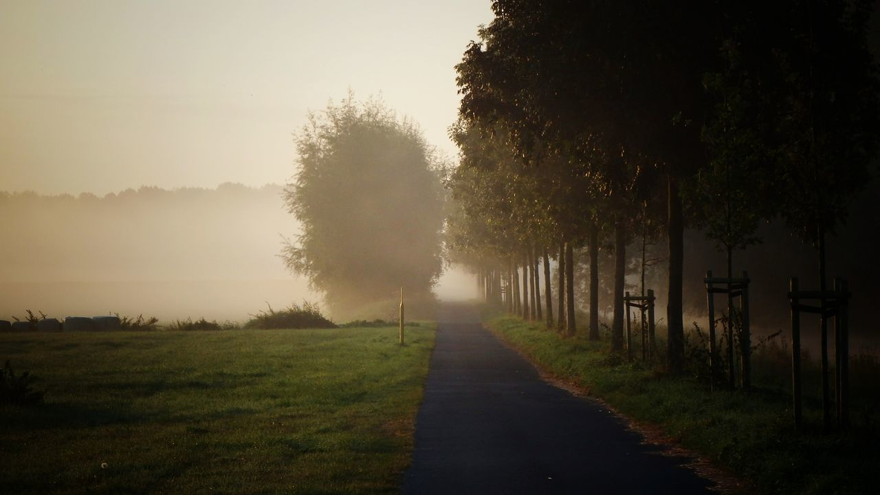 Footpath Amidst Trees In Park During Foggy Weather