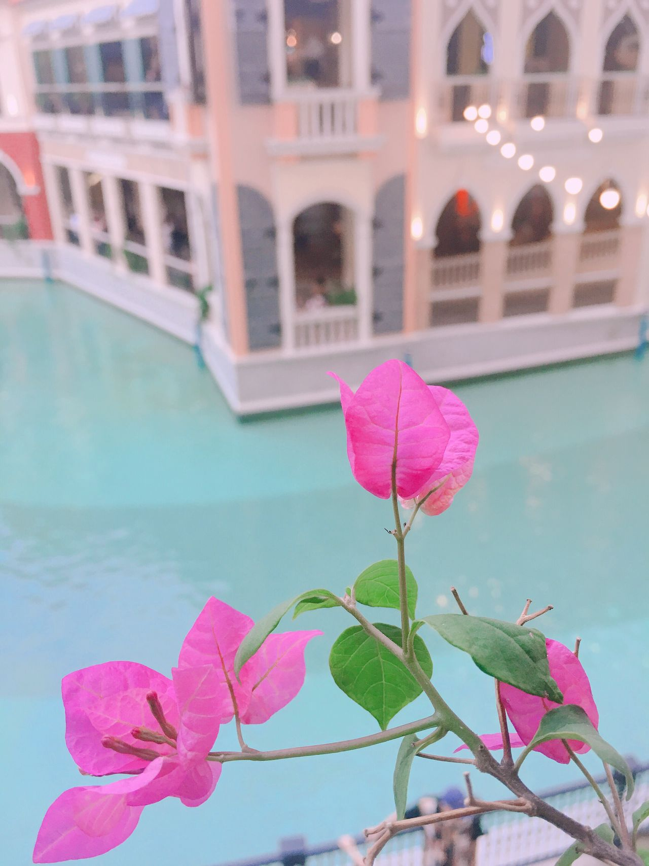 Pink Color Flower Leaf Day Fragility Petal Outdoors Beauty In Nature Growth Nature No People Architecture Plant Building Exterior Water Close-up Freshness Blooming Built Structure Bougainvillea Eyeem Philippines