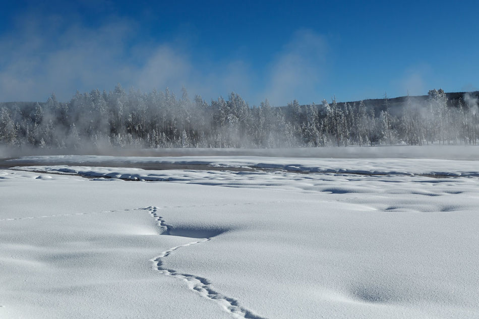 Tracks in snow Cold Temperature Day Frozen Landscape Nature No People Outdoors Polar Climate Scenics Snow Snowing Tracks In Snow Travel Destinations Winter Winter Wonderland ❄ Yellowstone National Park