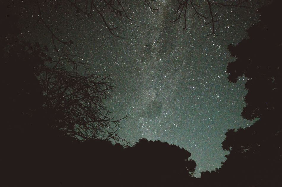 Beautiful stock photos of space, Astronomy, Beauty In Nature, Growth, Low Angle View