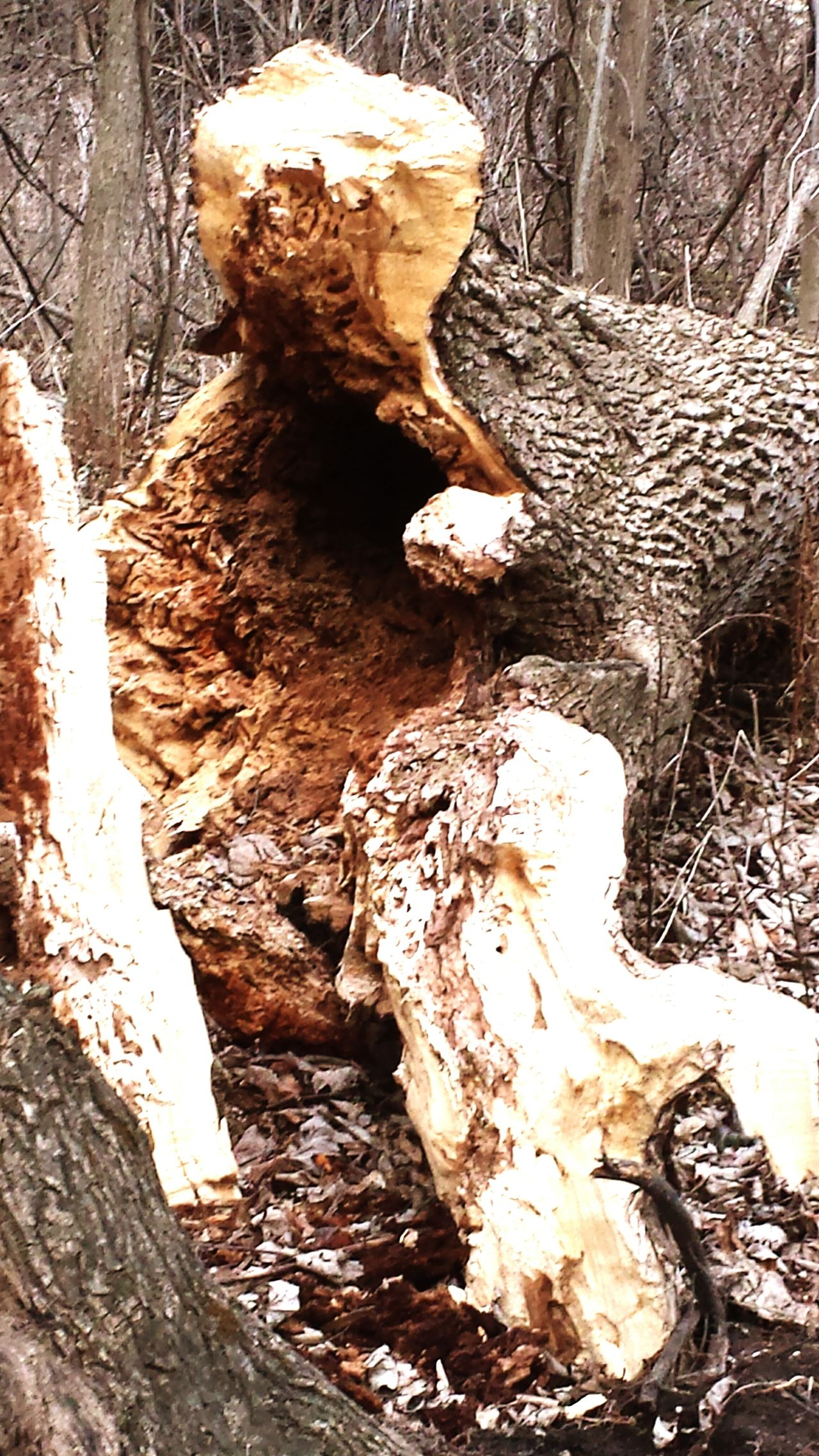 Fallen tree Nature No People Textured  Close-up Day Outdoors Tree Trunk Scenics Beauty In Nature Peace And Quiet Environment Fallen Tree Landscape