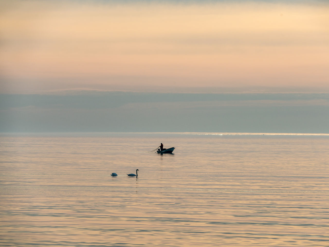 sunset, water, sea, nature, waterfront, animals in the wild, beauty in nature, scenics, outdoors, one animal, animal wildlife, sky, tranquility, tranquil scene, animal themes, no people, horizon over water, bird, nautical vessel, day