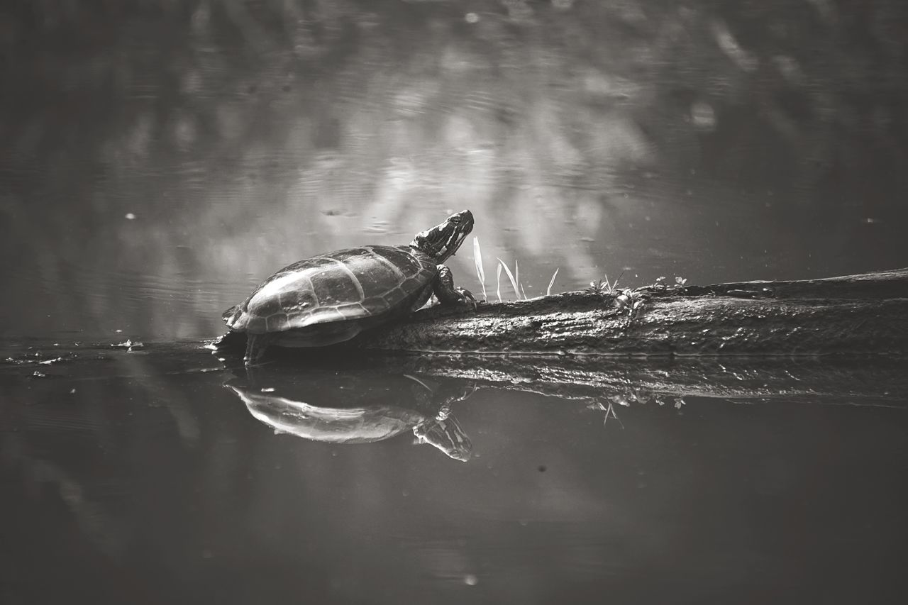 Extraction point Blackandwhite Shades Of Grey Wildlife & Nature Wetlands Turtle Nature Pond Swamp EyeEm Nature Lover Enjoying The Sun