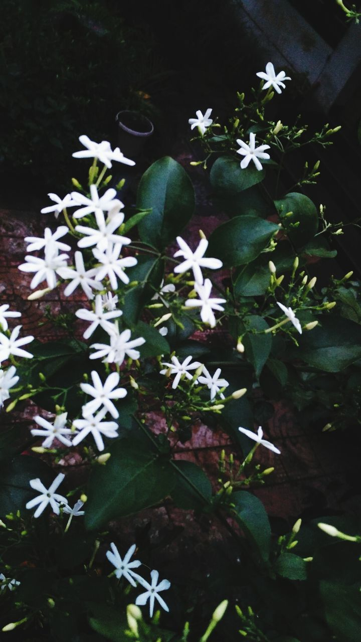 flower, high angle view, white color, nature, plant, freshness, beauty in nature, petal, fragility, no people, green color, day, leaf, outdoors, growth, flower head, blooming, close-up, periwinkle