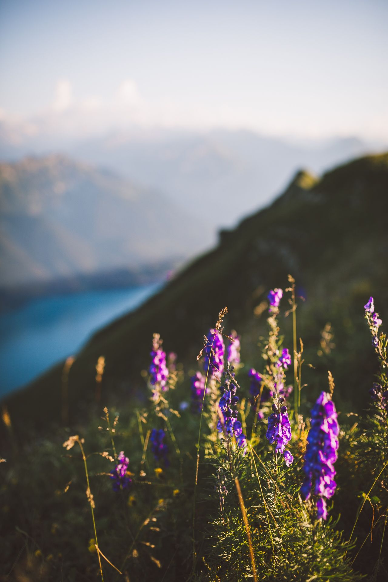 Summer is calling. Flower Nature Growth Beauty In Nature Field Plant Purple Focus On Foreground Mountain Outdoors Day Scenics Tranquility Freshness No People Landscape Sky Fragility Close-up Grass Switzerland