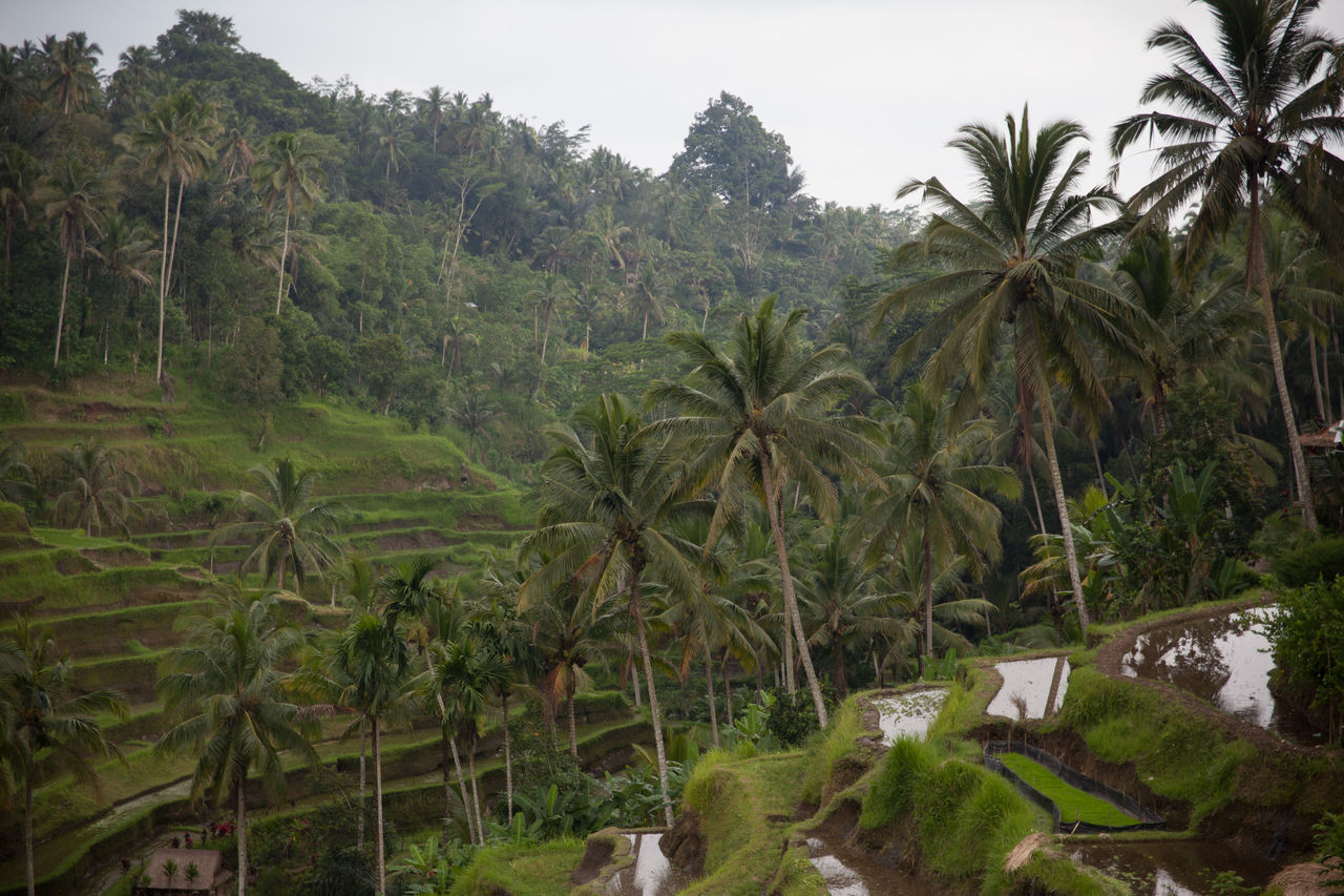 Beautiful stock photos of tropical, Agriculture, Day, Forest, Growth