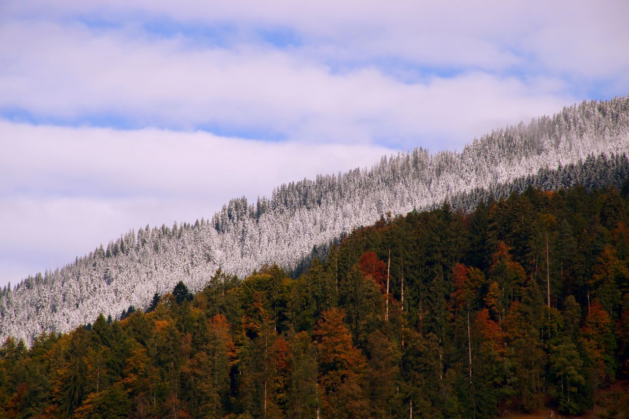 Idyllic View Of Trees Growing On Mountain Against Cloudy Sky