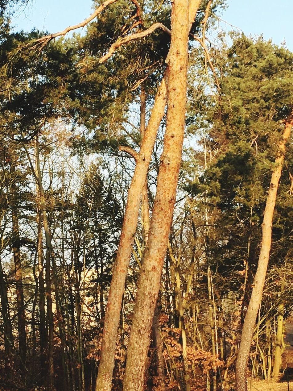 Tree Forest Sky Sun Nature Sunlight