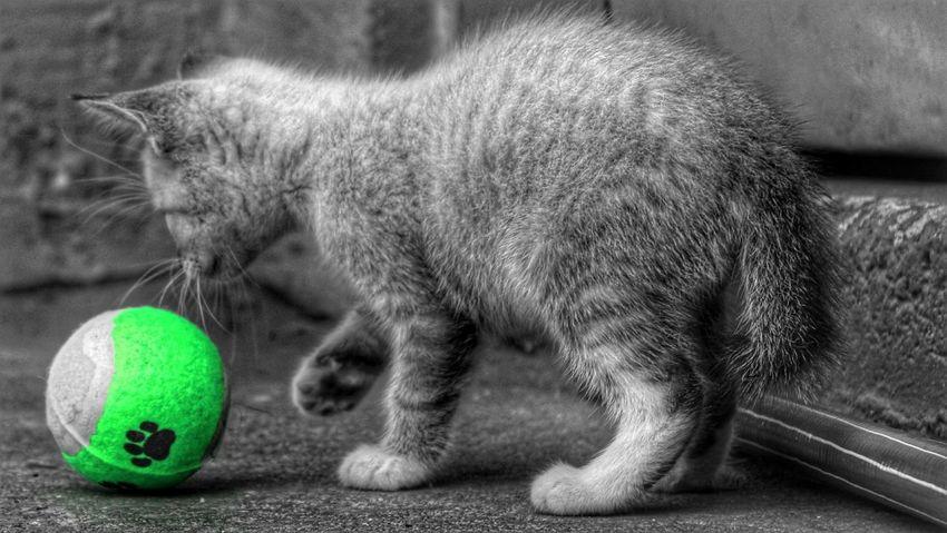 Procuro Um Lar 😿😿😿 I look for a home DPassos Cats Of EyeEm Abandoned Pet