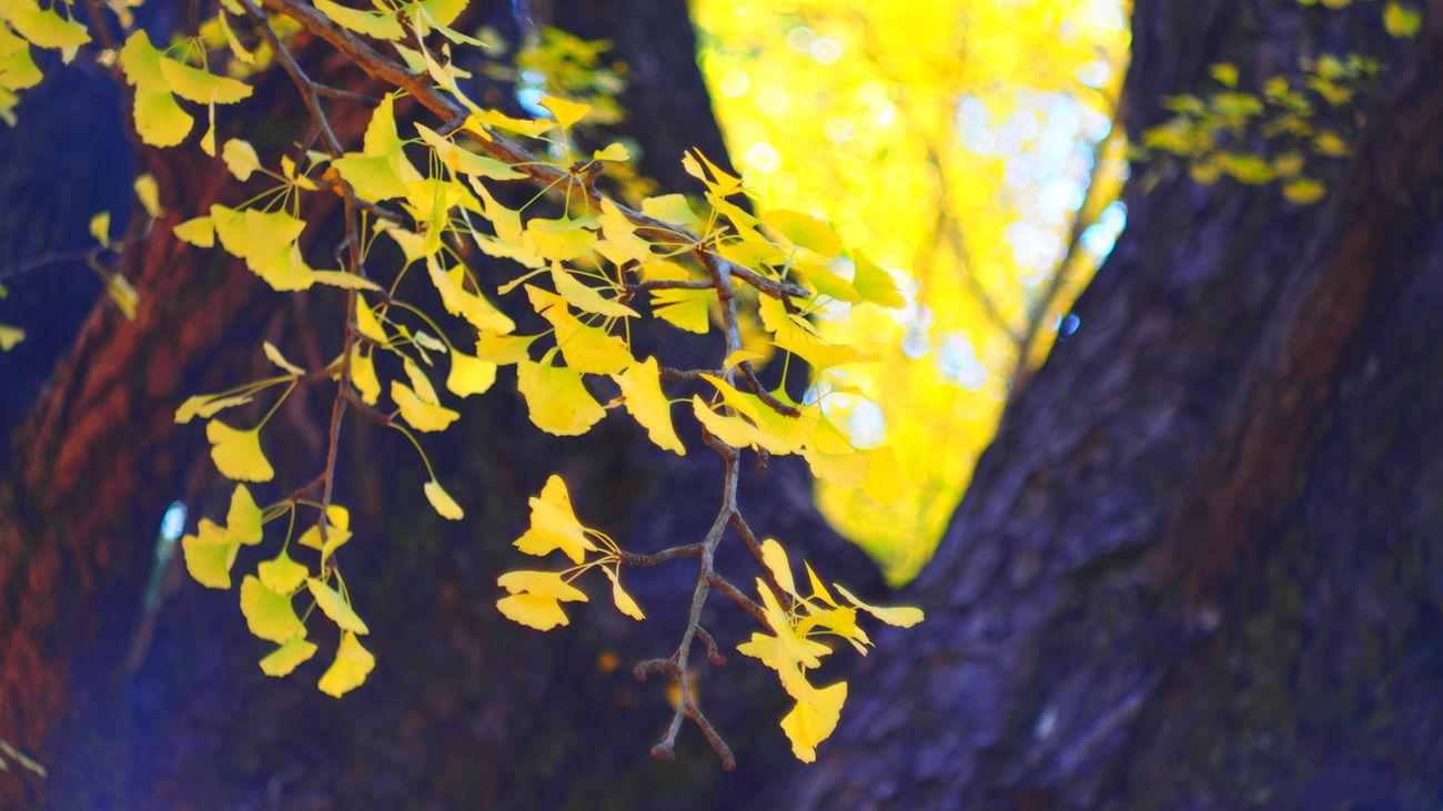 散りばめたなら Colors Hugging A Tree Eyeemnaturelover Helios #oldlens