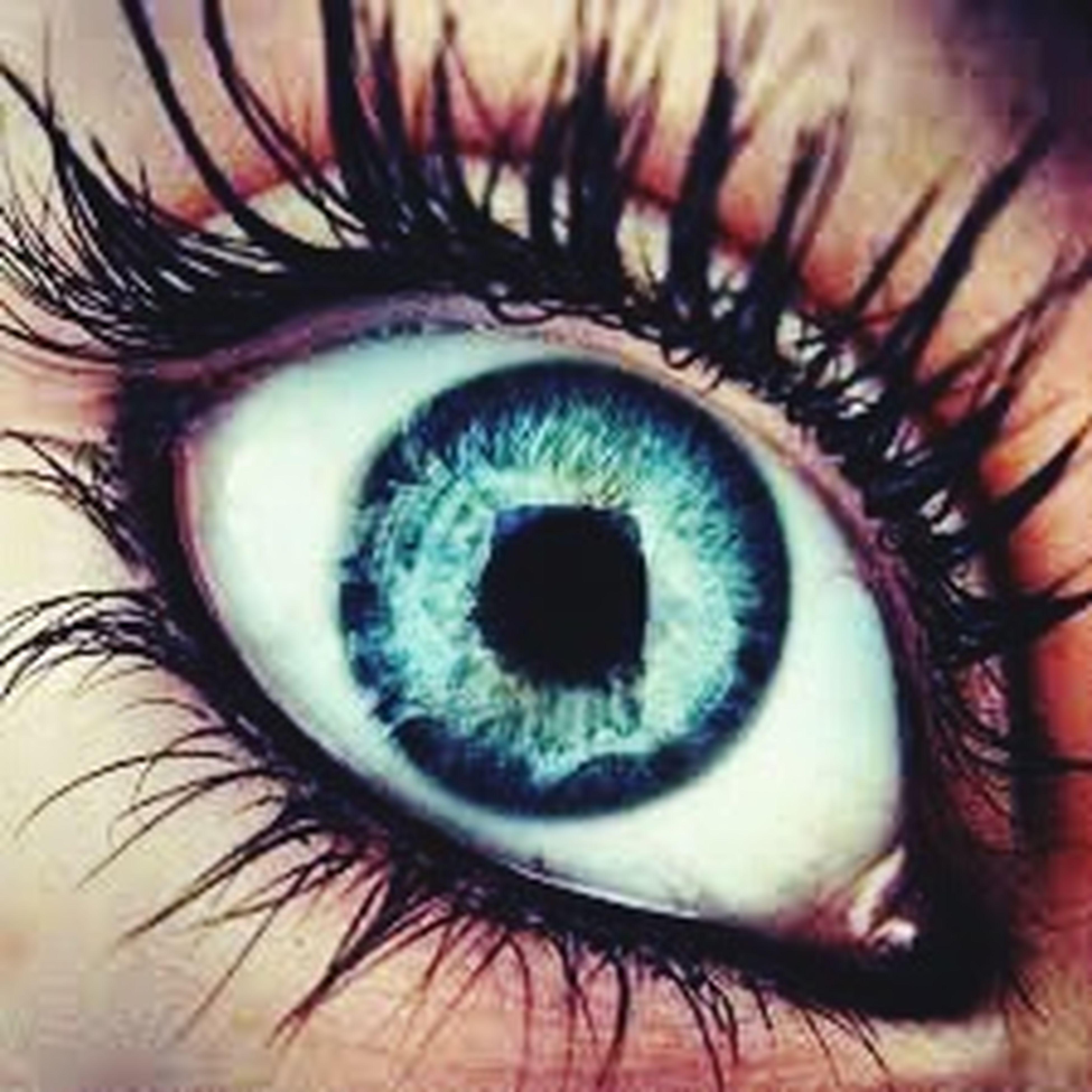 human eye, eyelash, eyesight, close-up, sensory perception, iris - eye, part of, eyeball, extreme close-up, extreme close up, unrecognizable person, full frame, human skin, person, macro, looking at camera, indoors