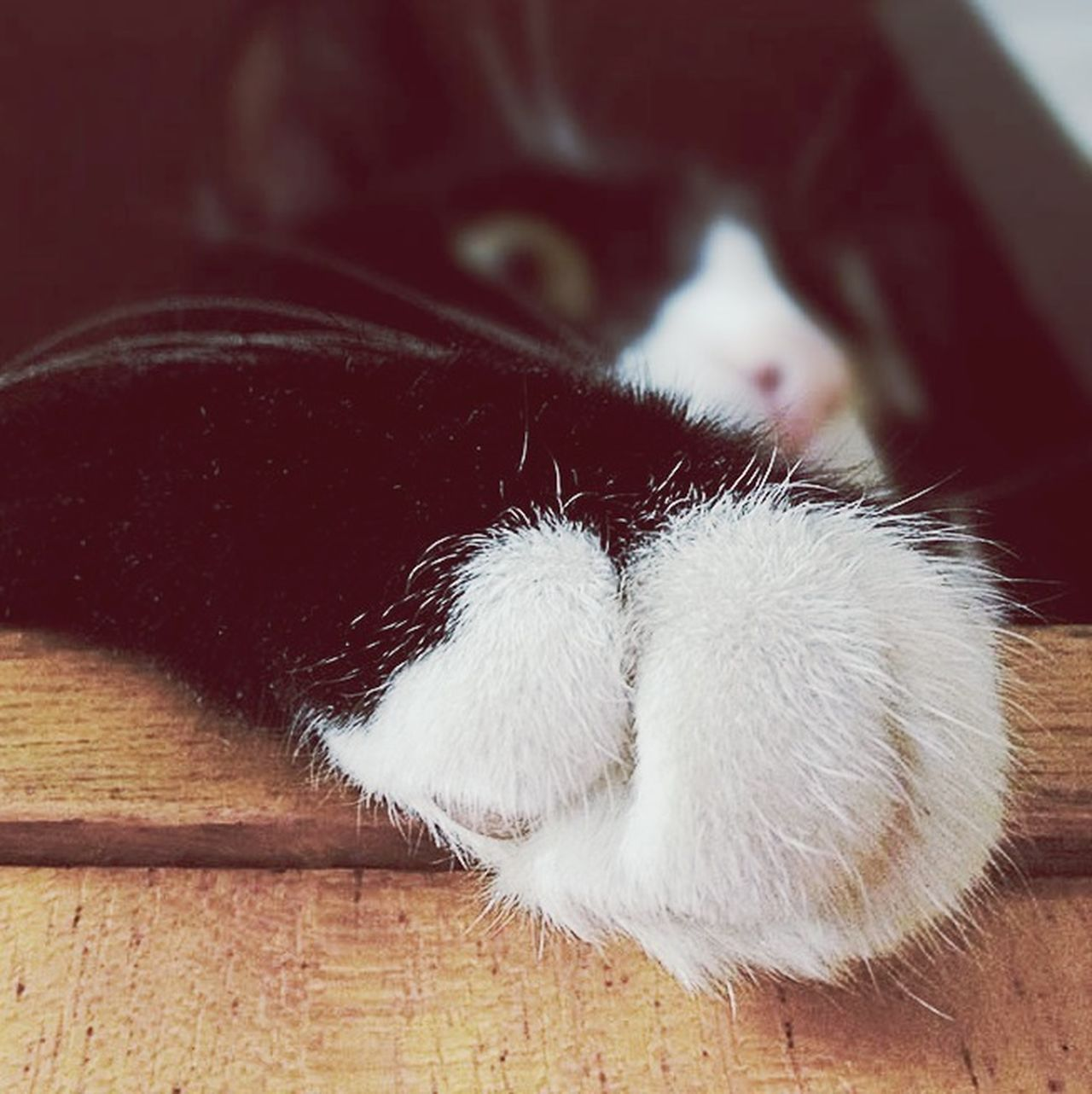 Cat Paw Paws Monique My Pet