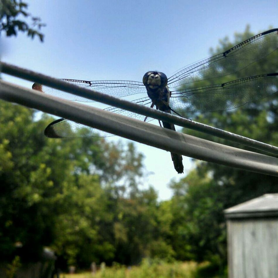 Dragonfly Up Close EyeEm Nature Lover Nature_collection