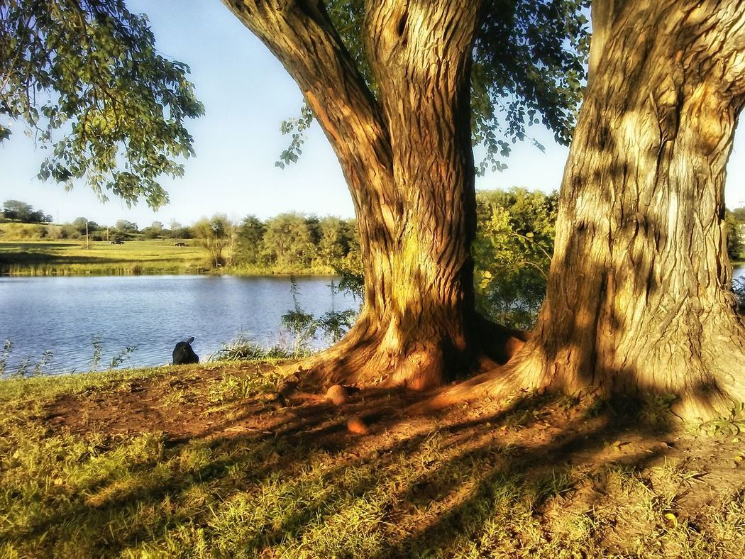 Tree Lake Water Tranquil Scene Tree Trunk Tranquility Scenics Sky Nature Solitude Outdoors Lakeside Beauty In Nature Non-urban Scene The Great Outdoors - 2016 EyeEm Awards September Days September Challenge Landscapes Growth Abundence Nature Photography Branch Tree Trunk Growth Tree