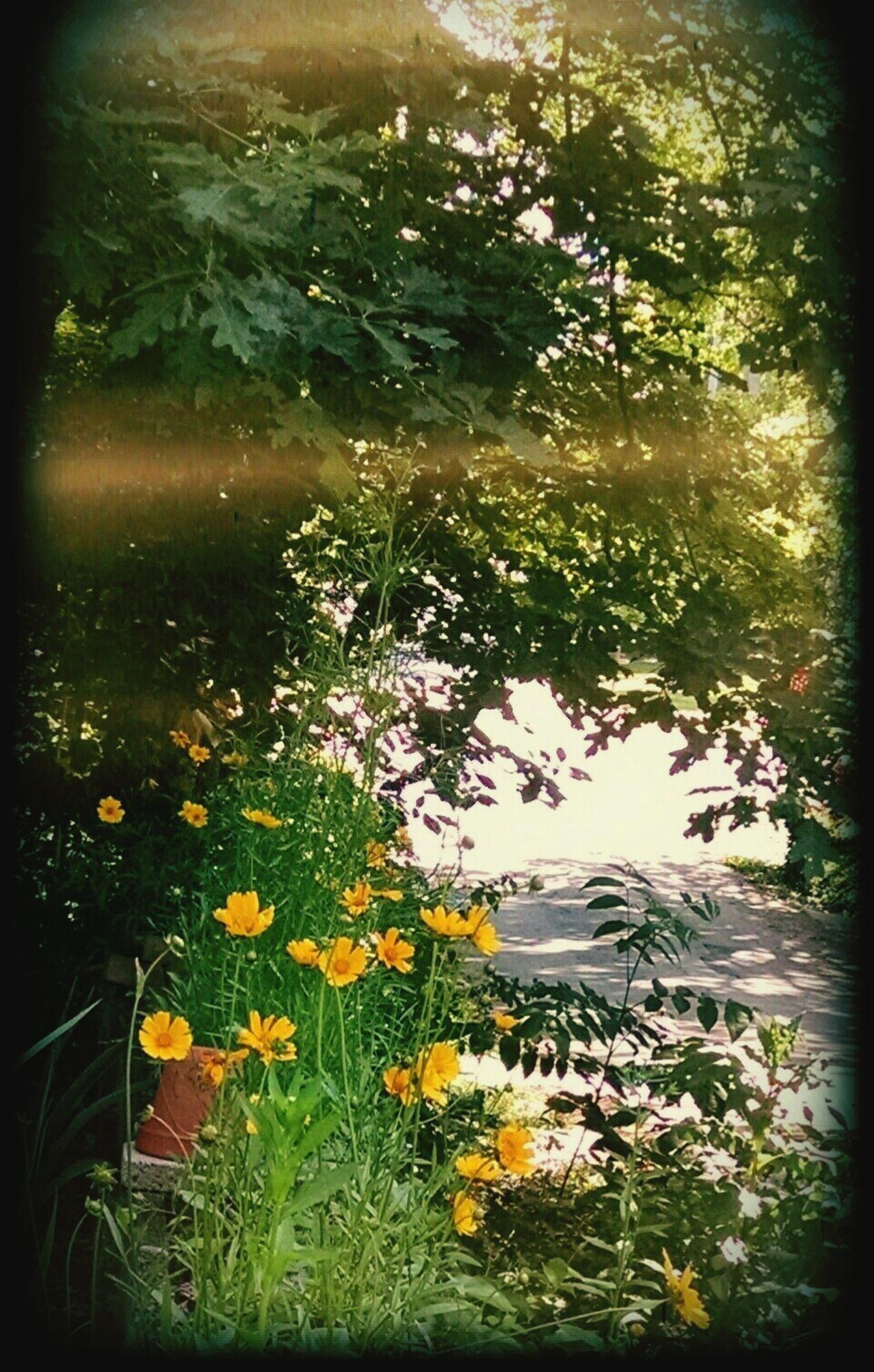 Weekend ♥ Blooming Morning Stroll...  Enjoying Life Springtime Carolina Morning~