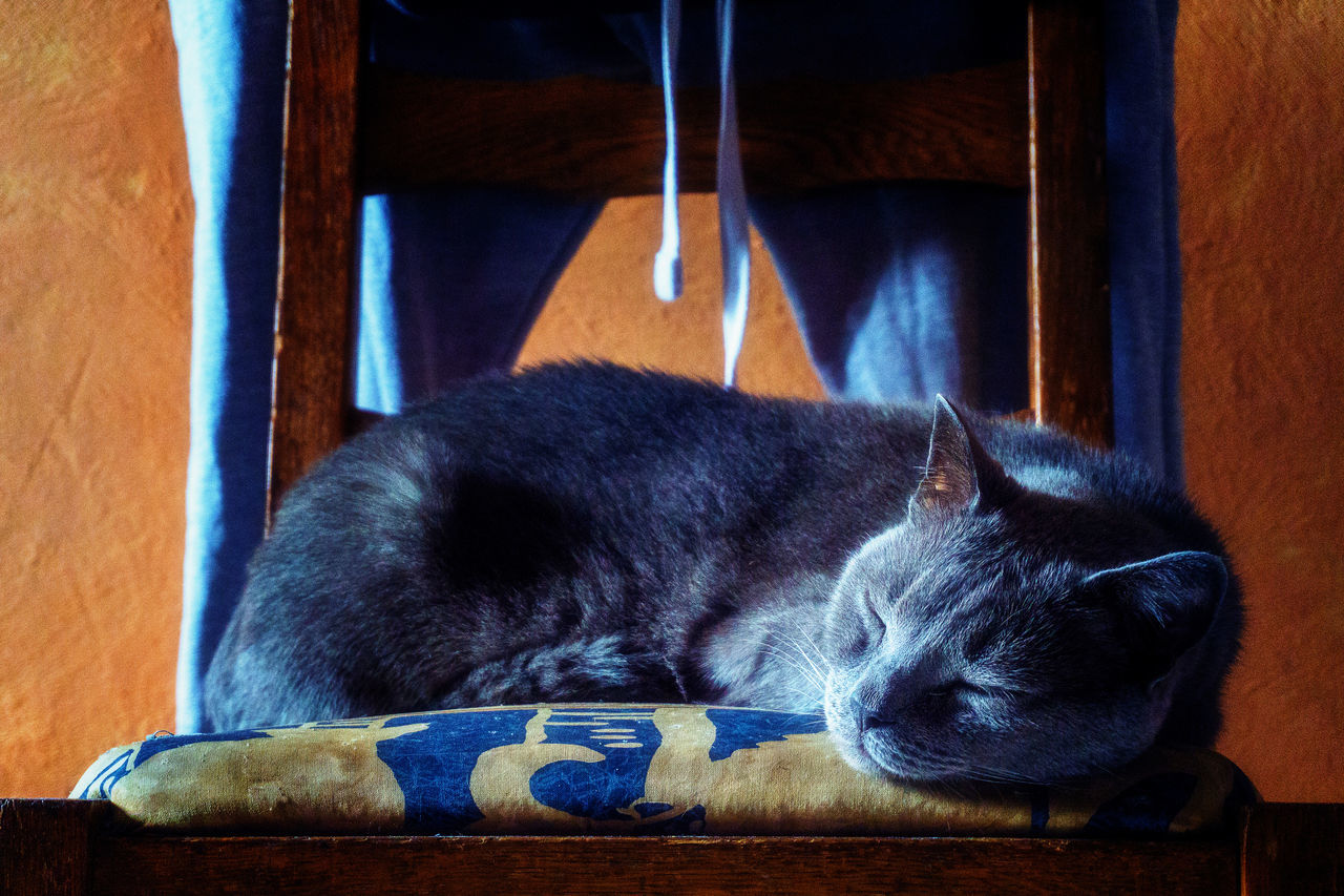 The sleeping cat (bis) Home Interior Indoor Photography Catoftheday Interior Photography Animal Photography Domestic Life Cat Animal Themes Tranquility Scene Colorful Portrait Photography Couleurs Colour Of Life Color Palette Serenity