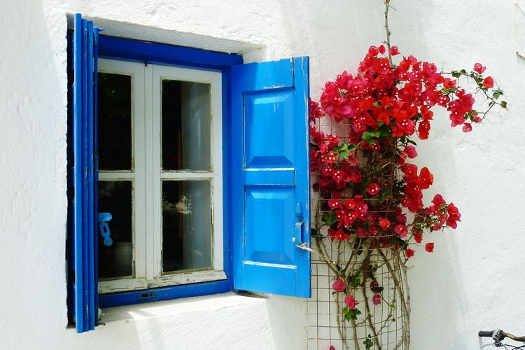 Window Flower Outdoors Red Blue Greece Architecture