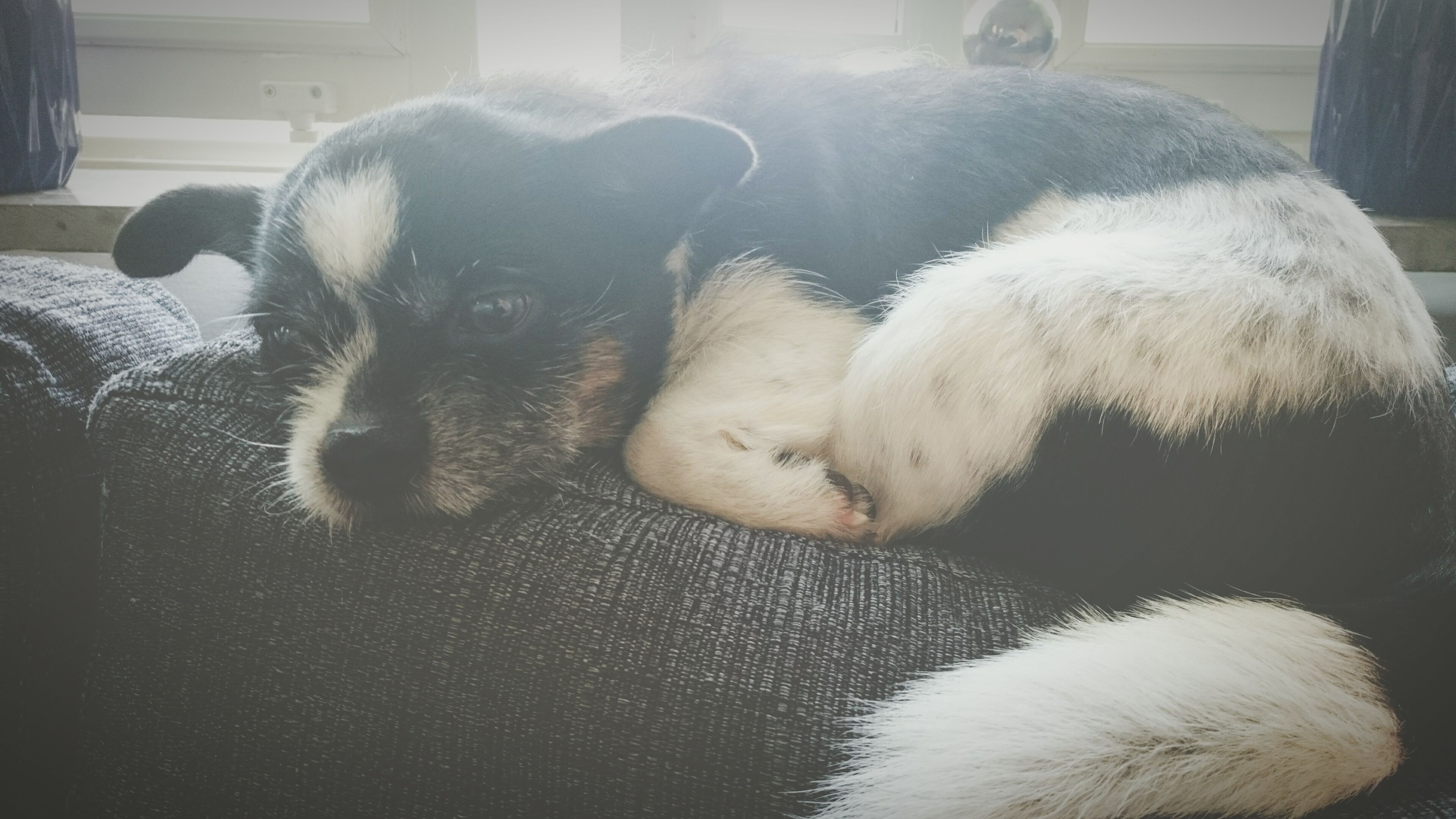 pets, one animal, domestic animals, animal themes, dog, mammal, sleeping, indoors, close-up, zoology, vertebrate, loyalty, resting, relaxation, animal body part, animal, at home, part of, lying down, animal head, pampered pets, selective focus, paw, animal nose, doormat, animal hair, cozy
