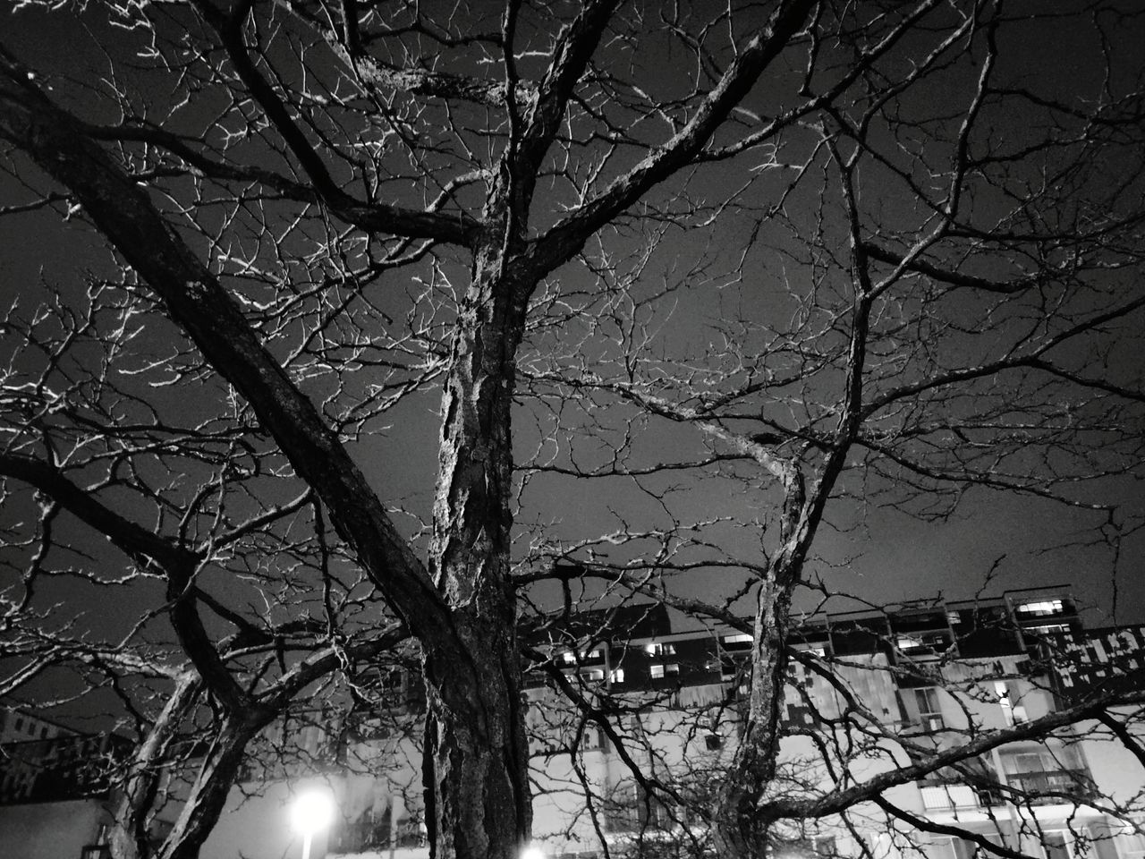 Tree Low Angle View No People Sky Bare Tree Night Black And White
