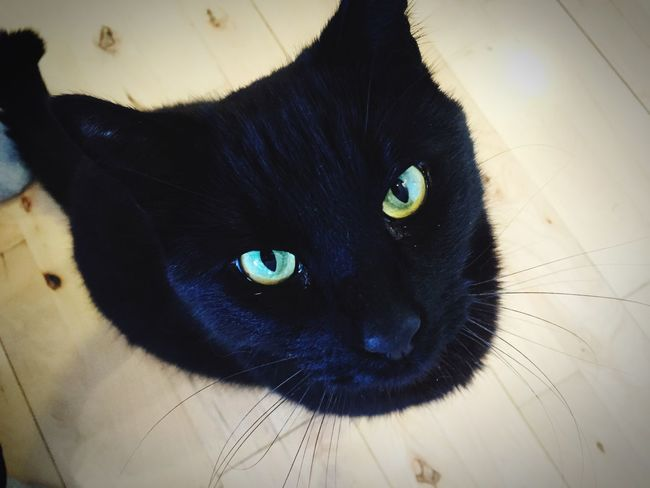 Black Cat My Bedst Friend  Love_animals I Love Cats Cheese!