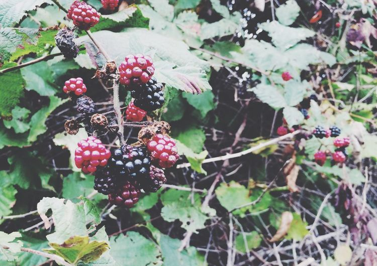 Fruits Berries Autumn Nature
