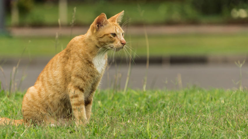 I Kinda Forgot What I Am Gonna Do... Nature Photography Animal Animal Themes Cat Cat Lovers Day Domestic Animals Domestic Cat Grass Nature No People One Animal Outdoors Pets Yellow Cat