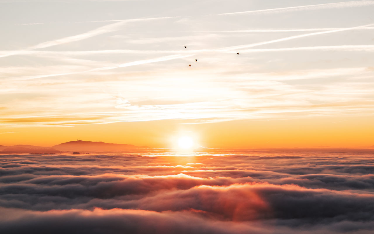 Above The Fog Sea Of clouds Above The Clouds Beauty In Nature Birds Cloud - Sky Flying Bird Fog Nature Orange Color Outdoors Scenics Sea Of Fog Sky Sun Sun Above The Clouds Sun Above The Horizon Sunset Tranquil Scene Tranquility Vapor Trail