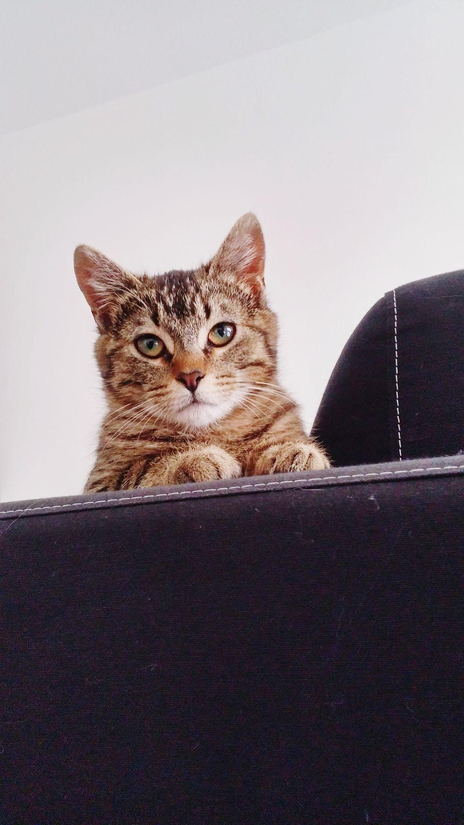 Neko again ^^ Cats 🐱 Cats Of EyeEm Cats Cat Cat Lovers Cat Eyes Open Edit Chat Cute Pet Cute Cats (>^ω^<) Cute Cat Adorable Adorable Cat  Cute Pets Neko