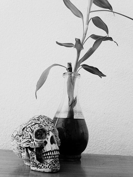 Plants Plant Skull Bamboo Bambu