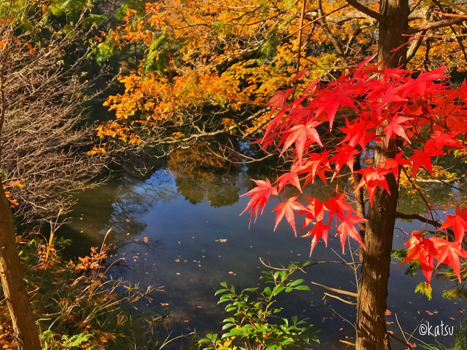 Went to mushroom-gathering with co-workers. I found a lot of leaves aflame with autumn colour. Autumn EyeEm Nature Lover