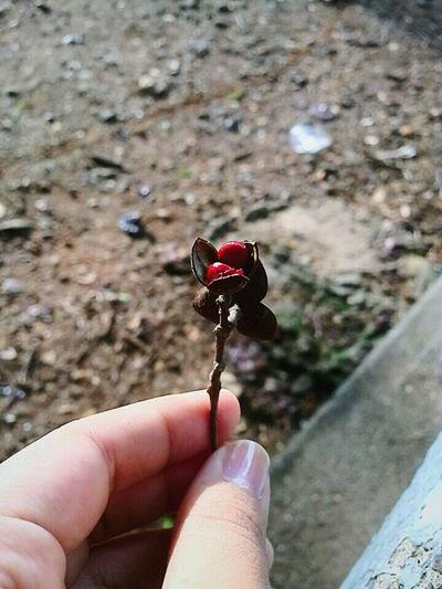 Vscocam VSCO Plant Flower Boho Taking Photos Mobilephotography Nature Photography