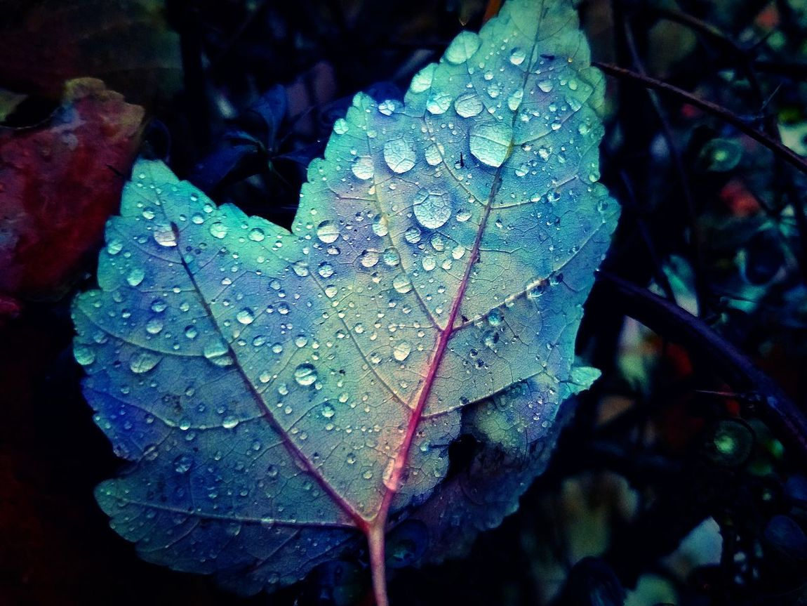 Fall Water Brown New York Blue Leaf Wet Nature Drop Close-up Water Rain Outdoors Autumn No People Fragility High Angle View RainDrop Beauty In Nature Day Growth Freshness Maple Maple Leaf