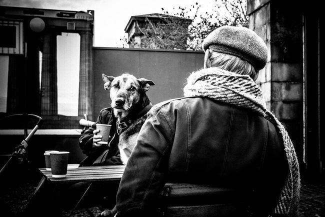 Showcase April Cmmaung Cmmaung.me Streetphotography Streetphoto_bw Street Dog Carlton Hill Edinburgh Scotland