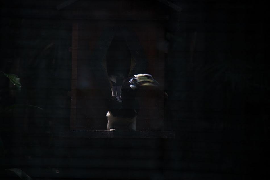Beak Bird Cage Close-up Dark Hornbill No People One Animal One Bird Tiny Bird