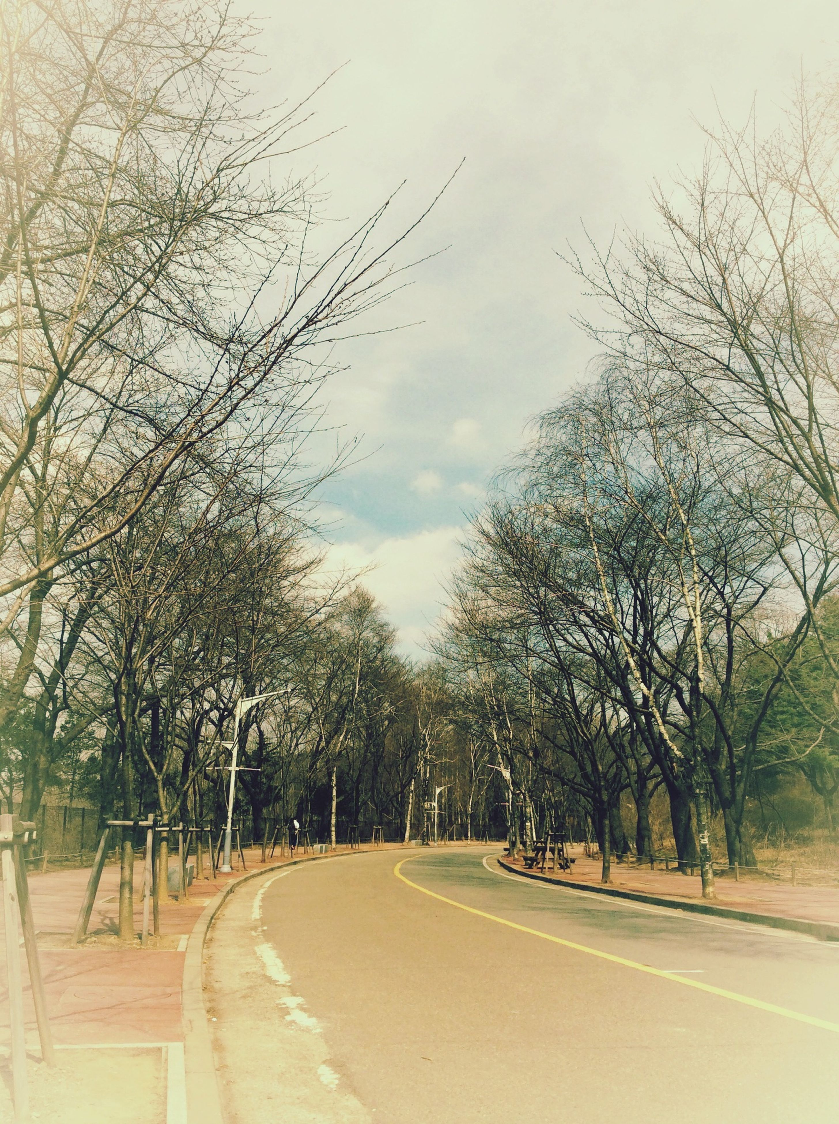 the way forward, road, tree, transportation, diminishing perspective, sky, road marking, vanishing point, empty road, tranquility, street, country road, empty, nature, tranquil scene, cloud - sky, treelined, long, day, bare tree