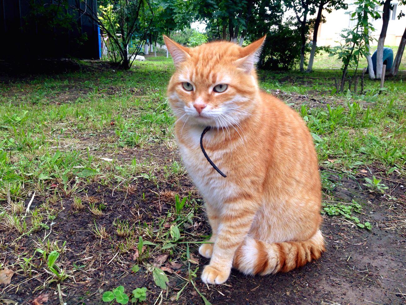 Коты кот котэ Cat♡ Cats Cat Homeless Cats