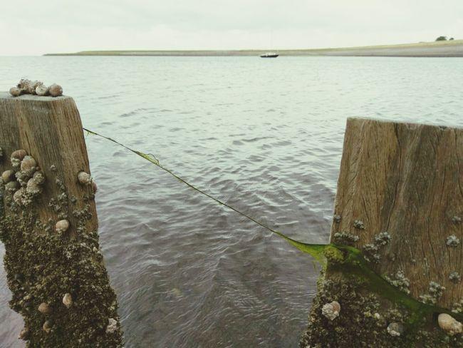 Texelstrand Hanging Out Crabfishing Enjoying Life Relaxing
