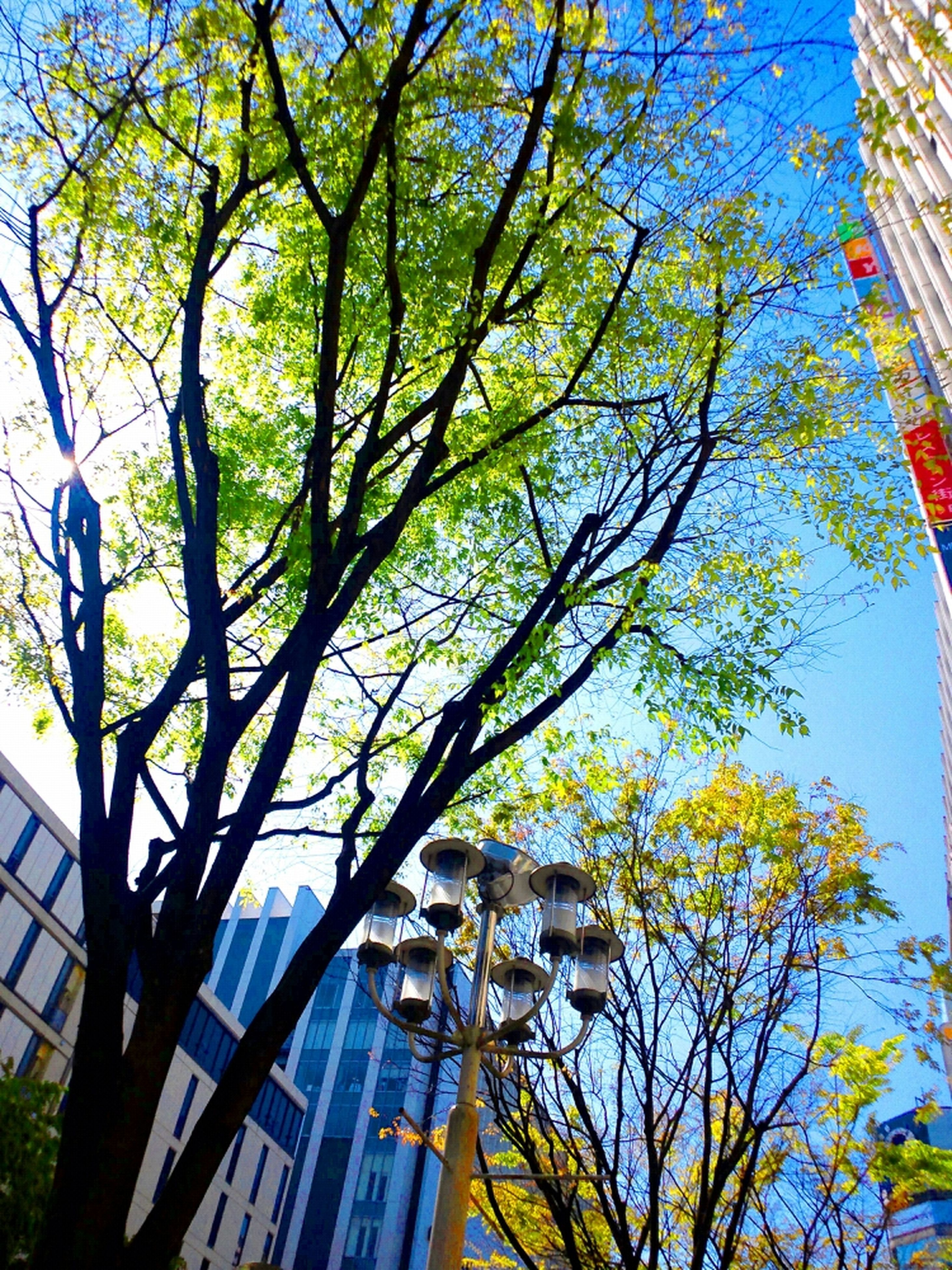tree, low angle view, building exterior, built structure, branch, architecture, growth, blue, city, sky, clear sky, tree trunk, sunlight, day, nature, no people, building, outdoors, tall - high, residential building