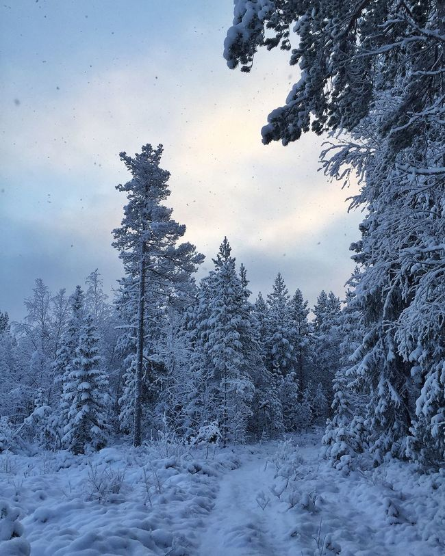 ᴵᶠ ᵂᴵᴺᵀᴱᴿ ᴴᴱᴸᴾˢ ᵞᴼᵁ ᶜᵁᴿᴸ ᵁᴾ ᴬᴺᴰ ᴹᴼᴿᴱ ᵀᴴᴬᵀ ᴹᴬᴷᴱˢ ᴵᵀ ᴼᴺᴱ ᴼᶠ ᵀᴴᴱ ᴮᴱˢᵀ ᴼᶠ ᵀᴴᴱ ˢᴱᴬˢᴼᴺˢ. ᴹᵁᴿᴿᴬᵞ ᴾᵁᴿᴬ. ❄️🌨❄️ AMPt_community TreePorn Trees Tadaa Community Vackra Dalarna Showcase: January Eye Em Best Shots
