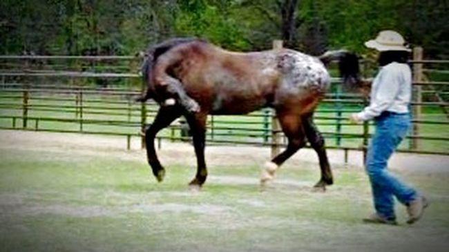 Snapshots Of Life The Dance The Dancer I Love Appaloosa's For The Love Of Horses EyeEm Animal Lover Çøłôūrfûłł Höršęś Bonding Time Communication Horses