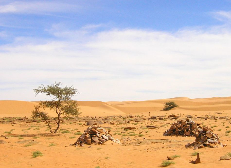 Acacia Tree Arid Climate Beauty In Nature Cairns Day Desert Landscape Nature No People Outdoors Sahara Sand Sand Dune Scenics Sky Tranquil Scene Tranquility