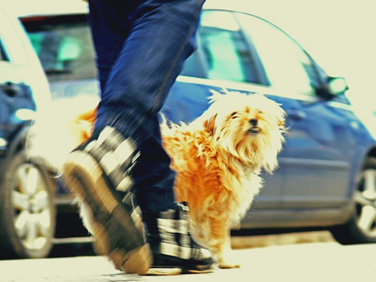 low section, human leg, blurred motion, motion, dog, pets, one person, one animal, transportation, car, walking, human body part, shoe, domestic animals, day, outdoors, real people, road, men, lifestyles, one man only, mammal, close-up, adult, people, adults only