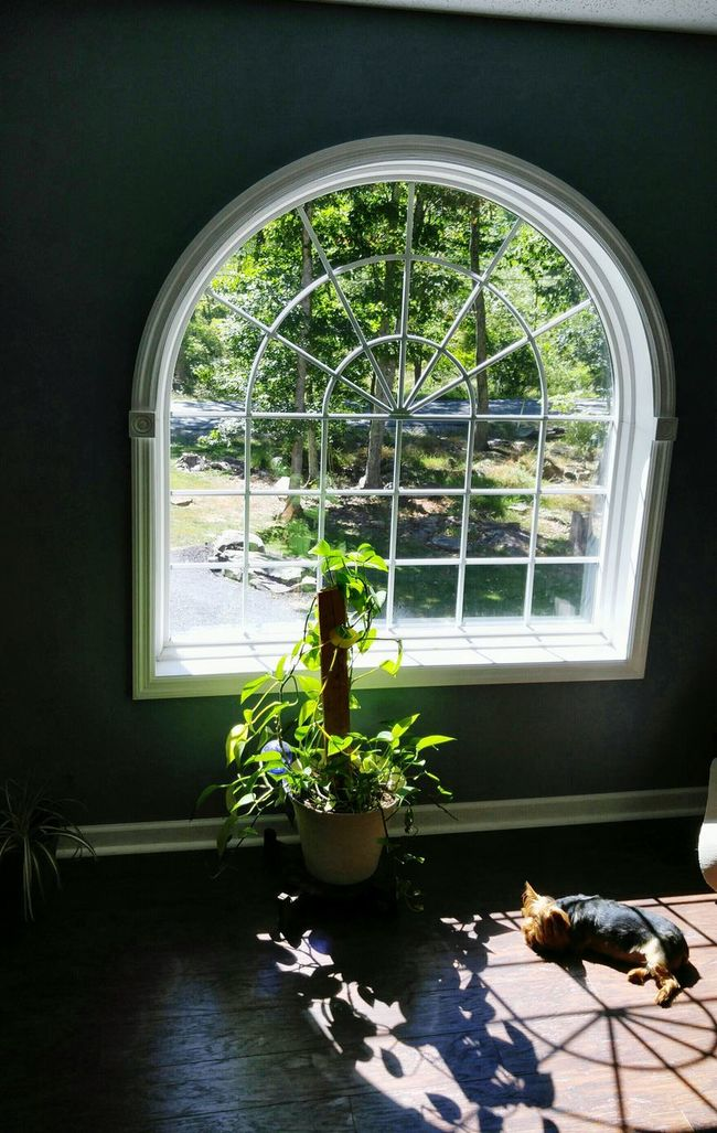 My Favorite Place Window Indoors  Potted Plant Arch Plant Day Growth Transparent Dog Photography Looking Through Window Sitting Dogoftheday Dog Life Dog Love Dogs Of EyeEm Tranquil Scene Dogsofinstagram Doggie Love Dog Days Dogmodel Dogs Life Dogstagram Dogs Favorite Place