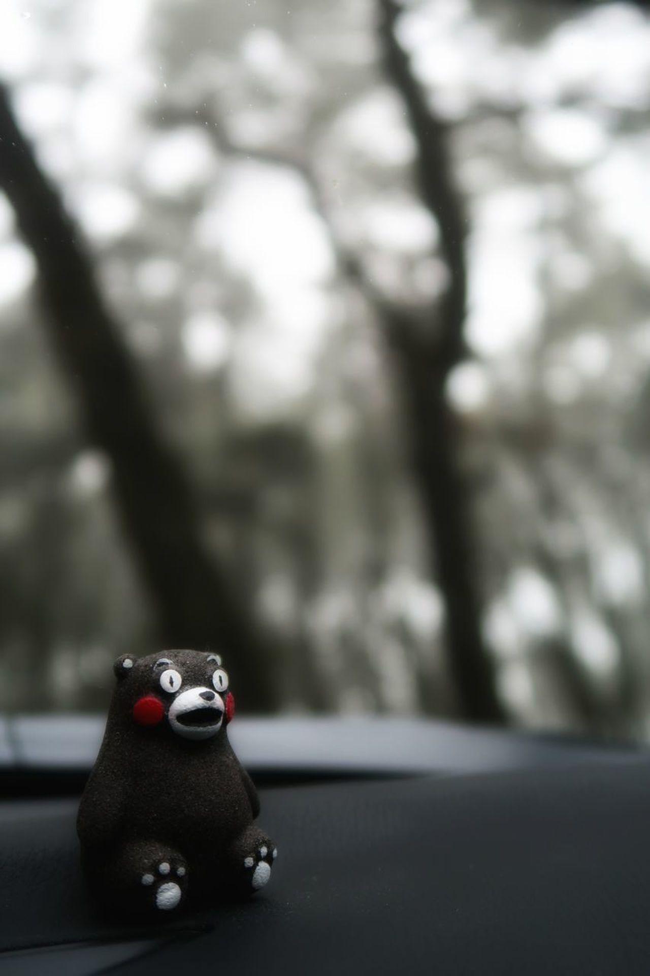 唐津 虹の松原 松林 砂浜 霧 雨上がり 木 マツダ アクセラ くまもん Toy Tree Forest Pine Trees Beach Fog Rainy Days Cloudy Day Road Green Color Car Mazda MaZda3 春 雨