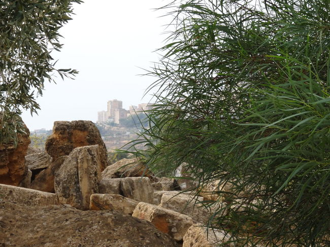 Through the times things are a-changingAgrigento Akragas Ancient Ruins EyeEm Italy Landscape Past And Present Rocks Sicily Take A Look Time To Reflect Tree Valle Dei Templi Times Showcase: July Thinking Profondità Di Campo