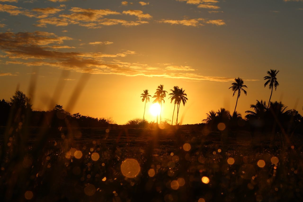 Sunrise Palm Tree Tree Growth Nature Scenics Sky Orange Color Silhouette Beauty In Nature Outdoors No People Sun Day Morning Light Morning Lights Sun Glare Golden Shimmer Dawn Dawn Of A New Day Sunrise_Collection Glare Palm Tree Silhouette Point Of View Capture The Moment Miles Away