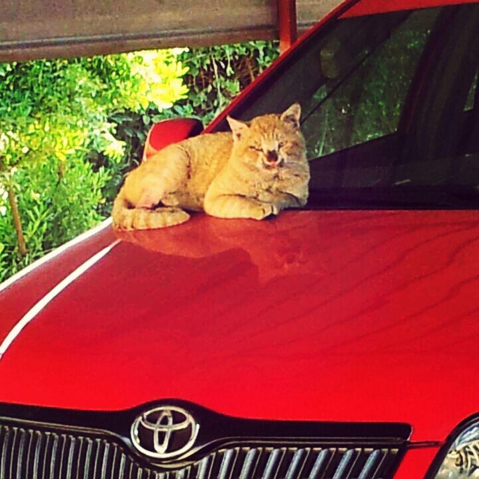 cute cat Cute Pets