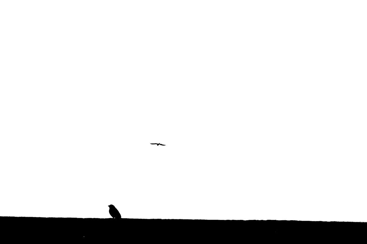 Do you still believe you can Fly 🐦 Yesyoucan Make Believe Flying Bird Duality Dualism Silhouette Low Angle View Animals In The Wild Animal Themes MnM MnMl Mnmlsm Minimalism Minimal Minimalistic Minimalmood Minimalist Minimalobsession Minimalart Minimalarchy Mobilephotography Shootermag Vscocam